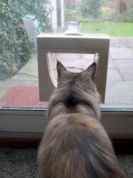 Cat Flap Fitter East London